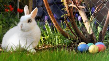 Furcsa húsvéti szokások a nagyvilágból