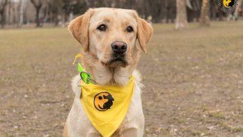 Felfedjük a kutyakiképzők titkát: minden, amit a négylábúak képzéséről tudni akartál
